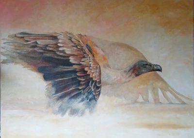 Vulture taking a dustbath 2017